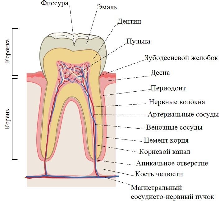 отбеливание зубов курск